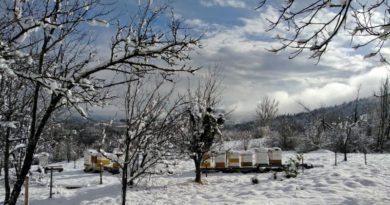 Tribina: Makarun – Priprema pčelinjih zajednica za zimu