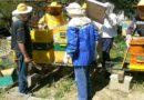 Kreće besplatna Mala škola pčelarstva